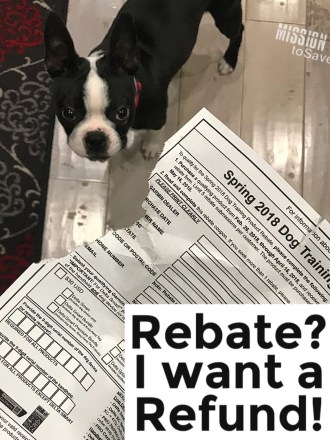 dog with chewed up dog training product rebate form