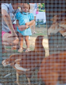 Two-year-old Anna Spencer Evans and her father, Erick Evans, checks out the chicken coop at the Livingston Farmers Market.