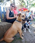 Honey, left, and Alice are just two of the four-legged friends gathered at the Livingston Farmers Market. The dogs owners, Quinn and Jacie Herring, attended the event with their grandfather, Keith Martin.
