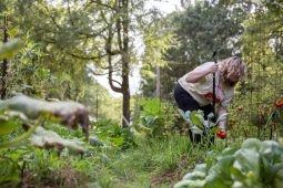 Whitney Wages was working to cultivate a vegetable garden outside her apartment in Lafayette County when her landlord expelled her from her home in late July. The landowner, Wilma Hughes, called the garden an eyesore, Wages said.