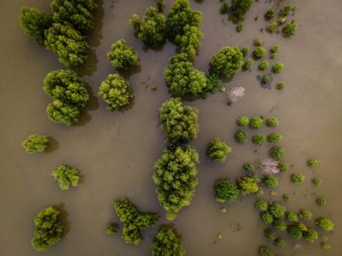 Tree Flood — 2020