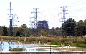 Canada geese forage along a growing shoreline, taking advantage of water being drained from the Lake Hico cooling ponds. Entergy is closing the Rex Brown Steam Engine Station that used the water.