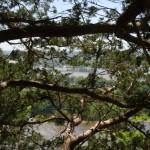 View atop Devil's Backbone State Natural Area