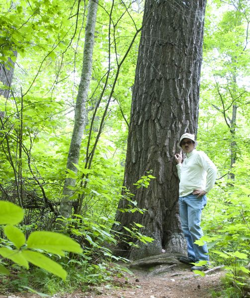Standing next to old white pine; MN