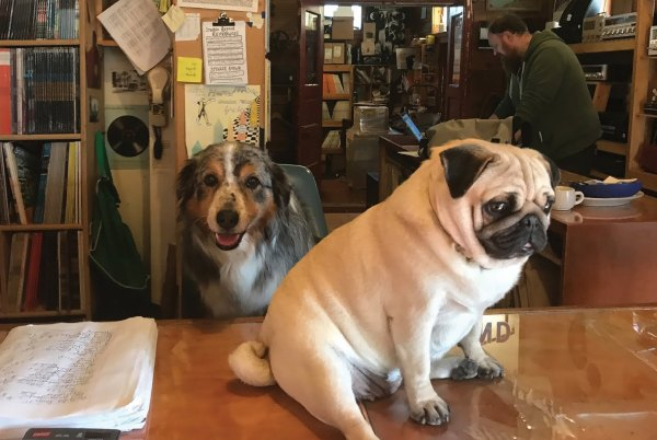 Dogs at the Counter Postcard
