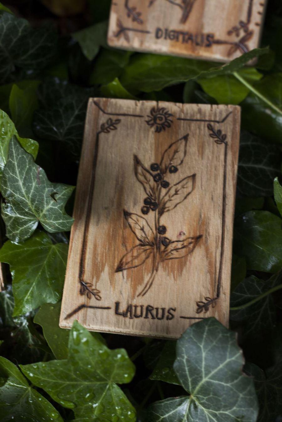 Décoration carte de tarot en bois inspirée des gravures anciennes botaniques de plantes, naturalisme, laurier, laurus,, upcyclé, par l'atelier de la Lettre aux ours - Missive to Bears, artisanat écologique et français en Normandie