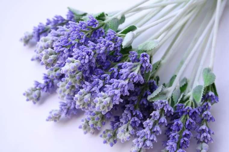 lavender-afsi