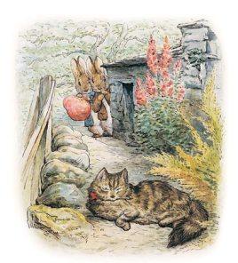 rabbits cat potter