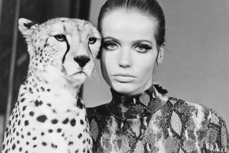 veruschka 1967 wild animals shoot