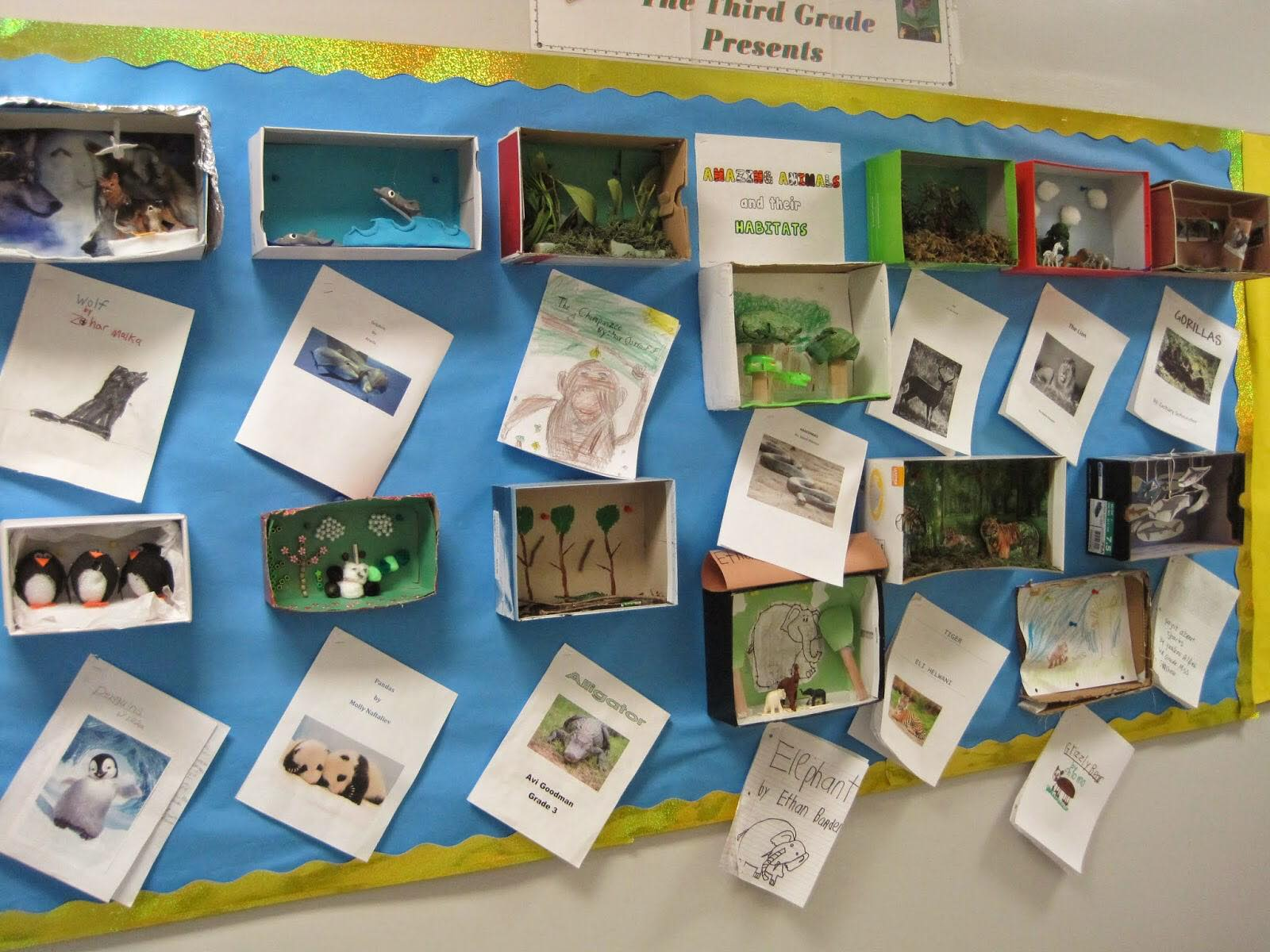 Amazing Animal Adaptations Survival Predators Inquiry