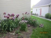 2012 Purple Garden before