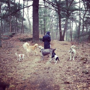 emily hayward, dog training in the forest