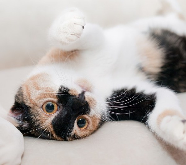 Should I Get a Cat? The Real Financial Cost of Owning a Pet