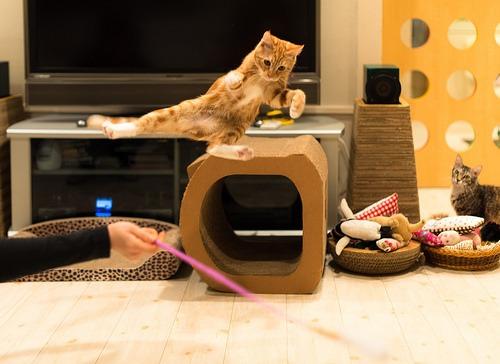 #PetSmartStory: Easy Ways to Keep Your Cat Healthy
