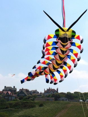 know about kites insect kite