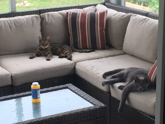 My Cats hanging out on the patio area