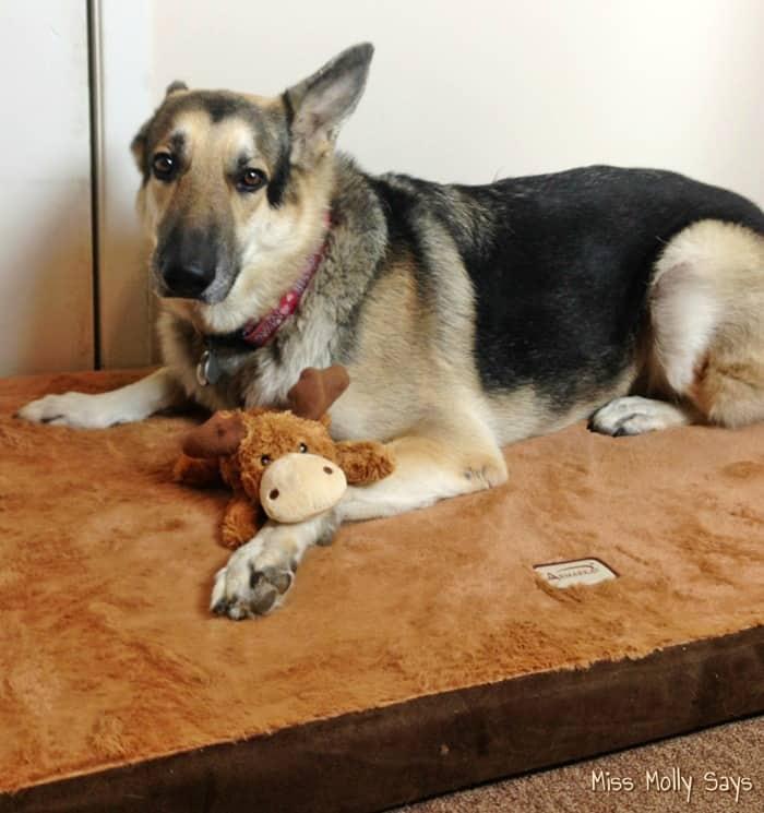 Win An Armarkat Memory Foam Orthopedic Pet Bed And Kong
