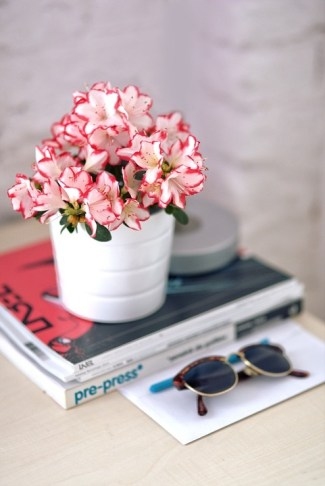 Azalea is another plant that absorb moisture naturally