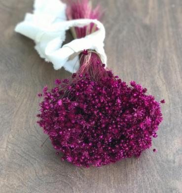 Dried star flowers