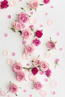 Exquisite rose aesthetic image for iPhone background