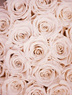 Luxury cream roses aesthetic image