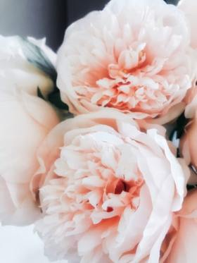 "No better way to say ""I love you"" than with peonies"