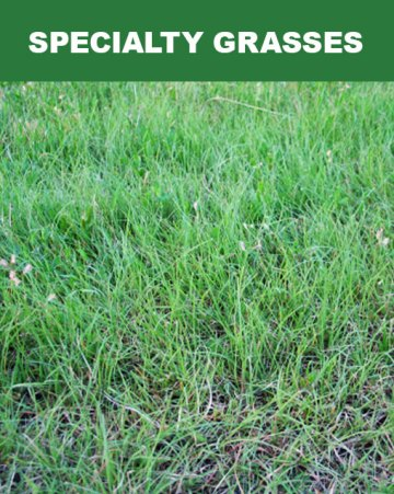 Specialty Grasses