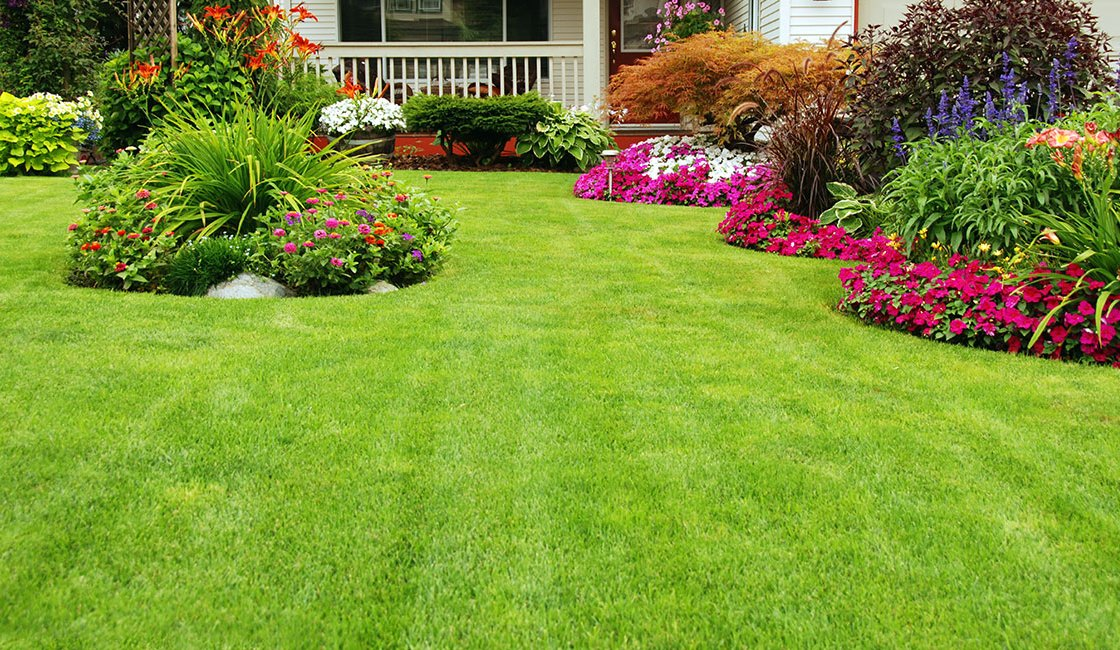 Immaculate Lawn