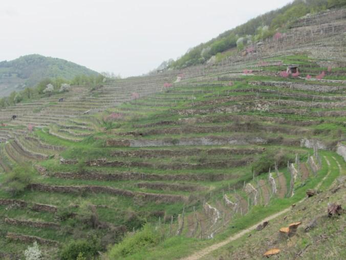 Spitzer Graben, vineyard terraces