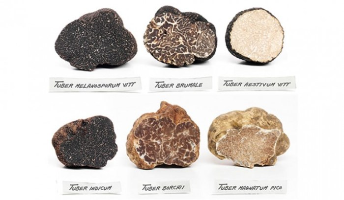 Types of Truffle Varieties