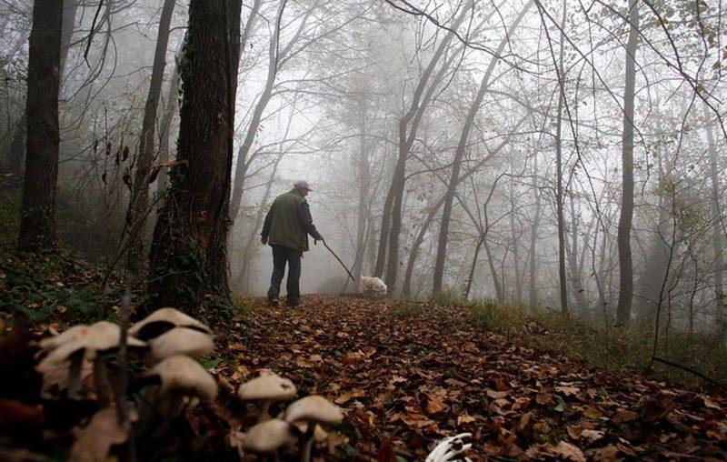Truffle hunter with dog