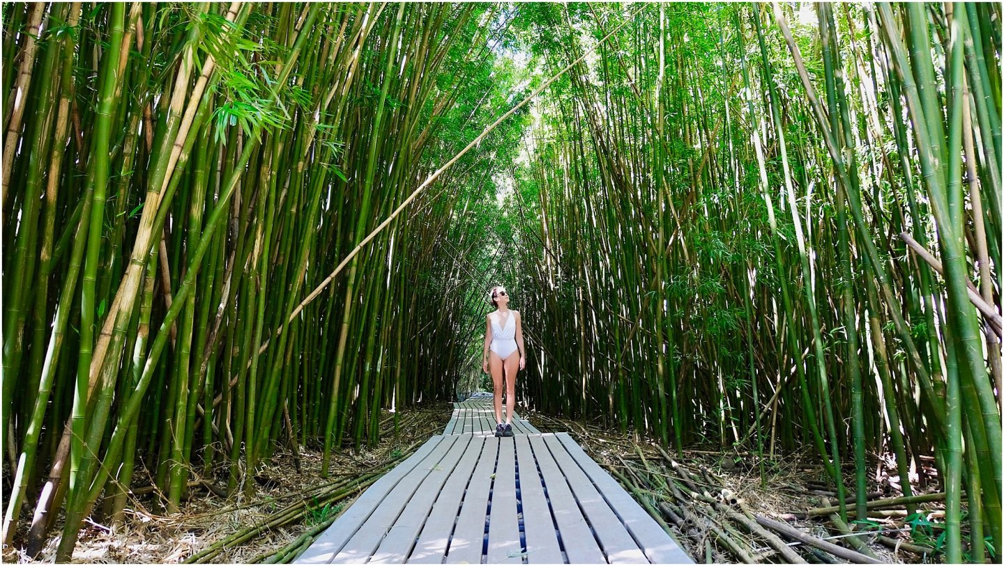 Pipiwaii Bamboo Forest- The road to Hana maui - Road or destination? Guest Post by Lara Olivia Miss Portmanteau? Club Elsewhere - The World's Travel Diary edited by Rosie Bell