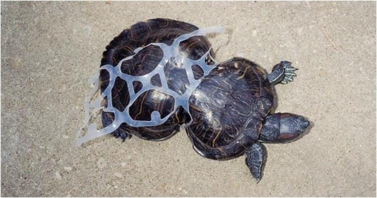 Peanut the Turtle