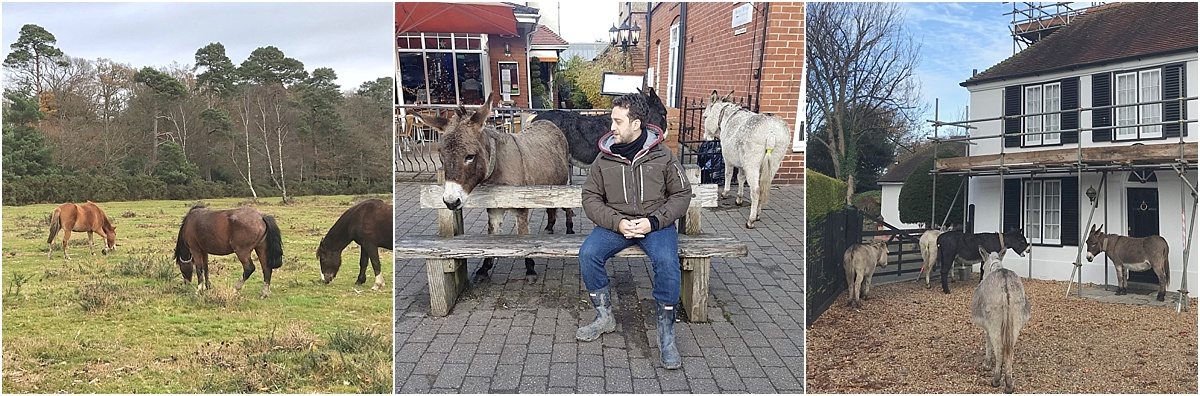 Roaming Animals in New Forest