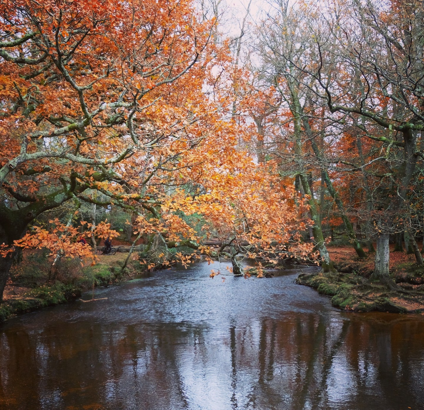 New Forest: British Country Escape