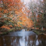 New Forest Feature Image
