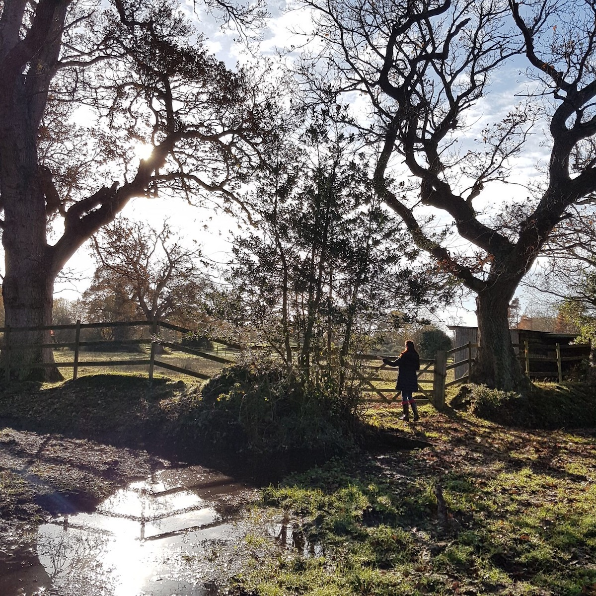 Sunny Day in New Forest