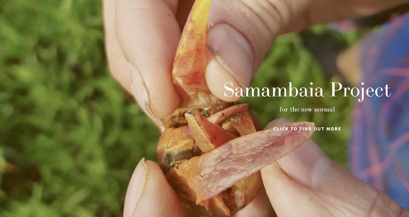 Samambaia Project London