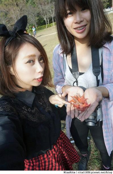 清境觀光巴士 奧萬大森林遊樂區 賞楓22