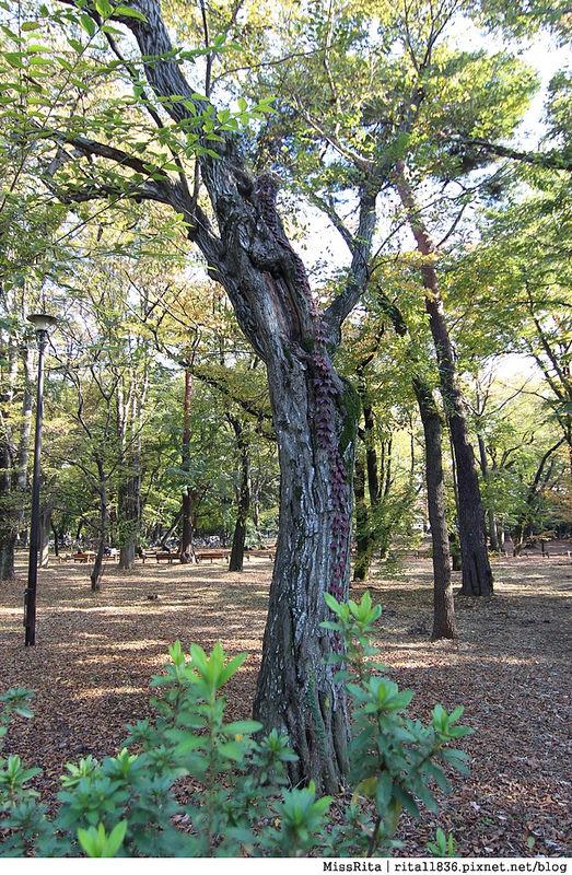 東京 好玩景點 三鶯之森吉力卜宮崎駿美術館 井之頭恩賜公園52