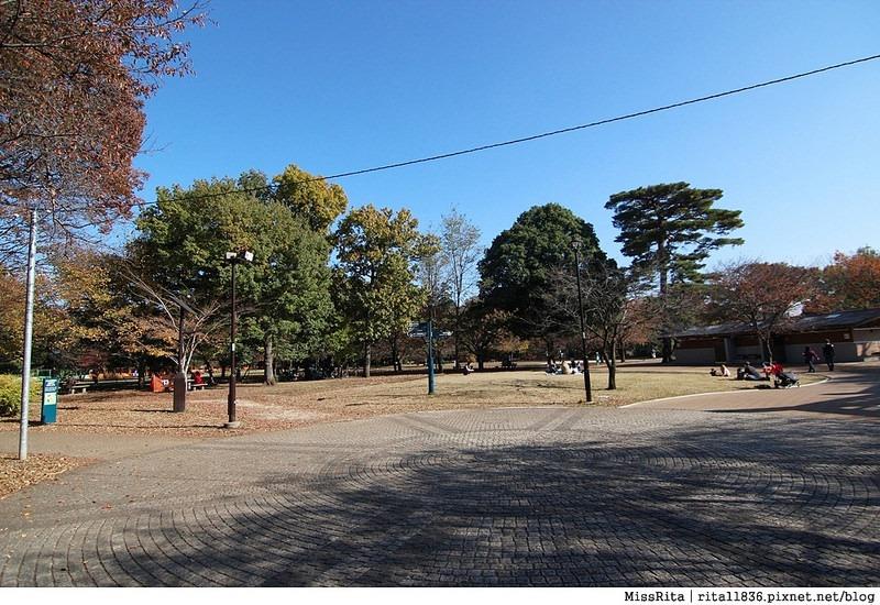 東京 好玩景點 三鶯之森吉力卜宮崎駿美術館 井之頭恩賜公園38