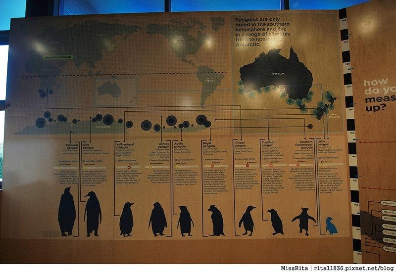 KKDAY 墨爾本自由行 melbourne gowesttours kkDAY墨爾本 墨爾本企鵝 澳洲自助 墨爾本自助 菲利浦島 菲利浦島交通 墨爾本必去 墨爾本酒莊 月光野生動物 Nobbies 墨爾本企鵝歸巢 墨爾本一日遊 菲利普島一日遊,小企鵝歸巢遊行97