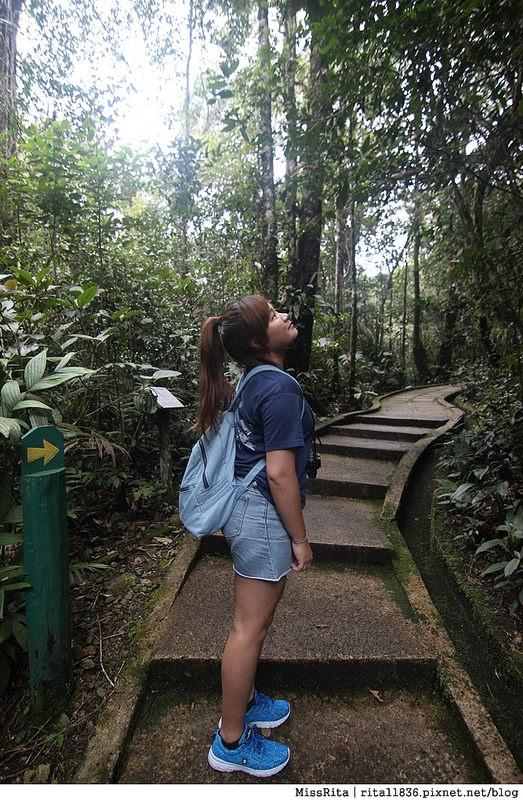 馬來西亞自由行 馬來西亞 沙巴 沙巴自由行 沙巴神山 神山公園 KinabaluPark Nabalu PORINGHOTSPRINGS 亞庇 波令溫泉 klook 客路 客路沙巴 客路自由行 客路沙巴行程35
