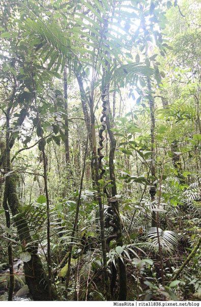 馬來西亞自由行 馬來西亞 沙巴 沙巴自由行 沙巴神山 神山公園 KinabaluPark Nabalu PORINGHOTSPRINGS 亞庇 波令溫泉 klook 客路 客路沙巴 客路自由行 客路沙巴行程22