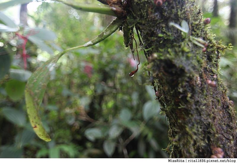 馬來西亞自由行 馬來西亞 沙巴 沙巴自由行 沙巴神山 神山公園 KinabaluPark Nabalu PORINGHOTSPRINGS 亞庇 波令溫泉 klook 客路 客路沙巴 客路自由行 客路沙巴行程25