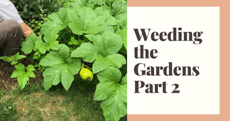 Weeding the Gardens | Part 2