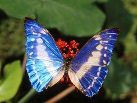 Beautiful-Butterflies-butterflies-9481720-1600-1200