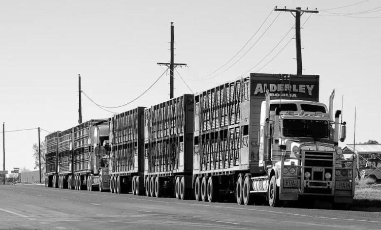 Jenis- jenis cargo