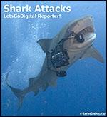 shark eats camera