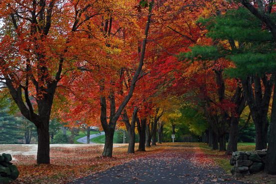 trees and fallen leaves in red and orange